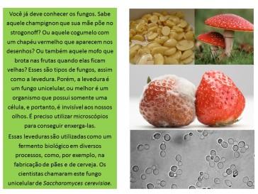 fungos e leveduras