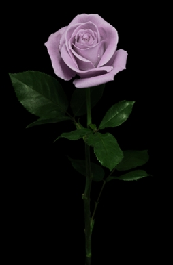 loop_flowers03