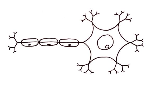 neuronio1