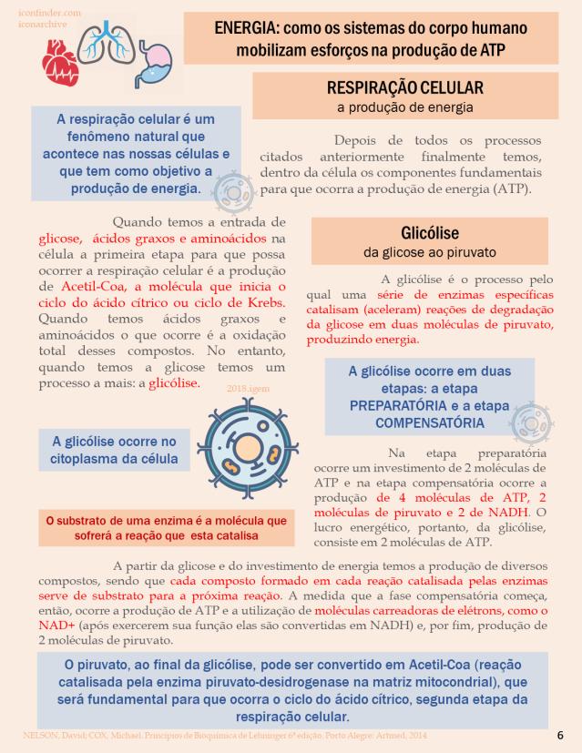 BIOQUIMICA REVISTA 6