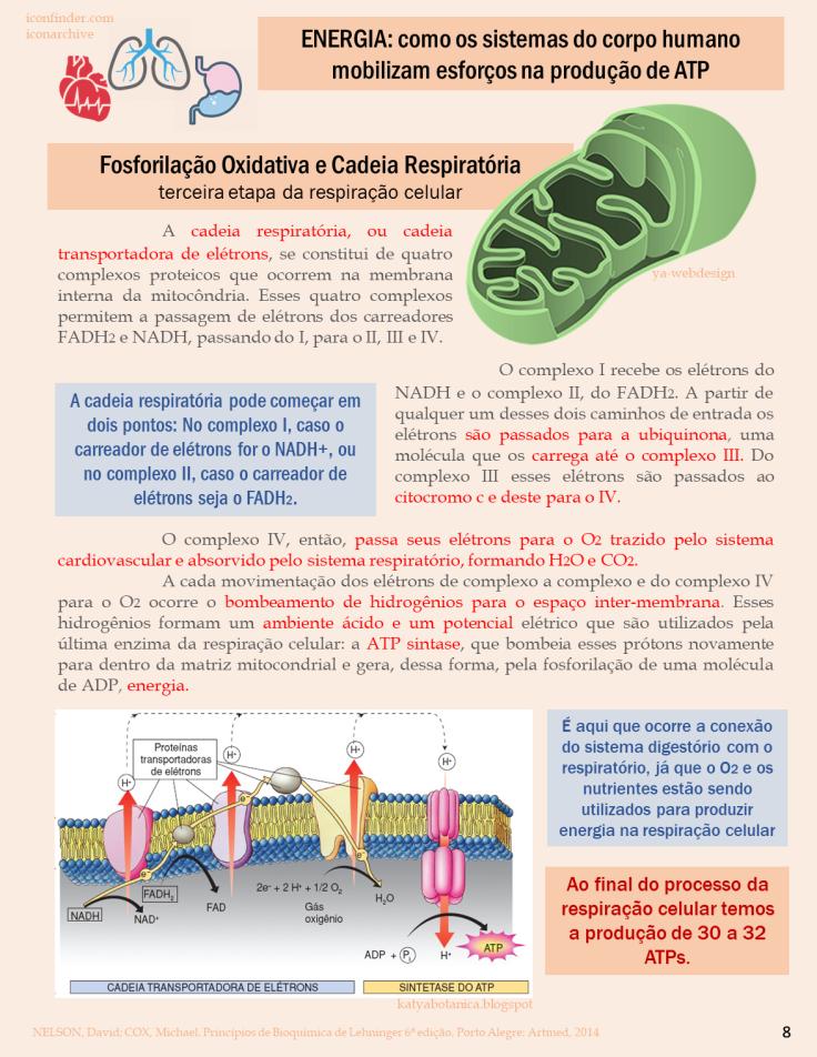 BIOQUIMICA REVISTA 8