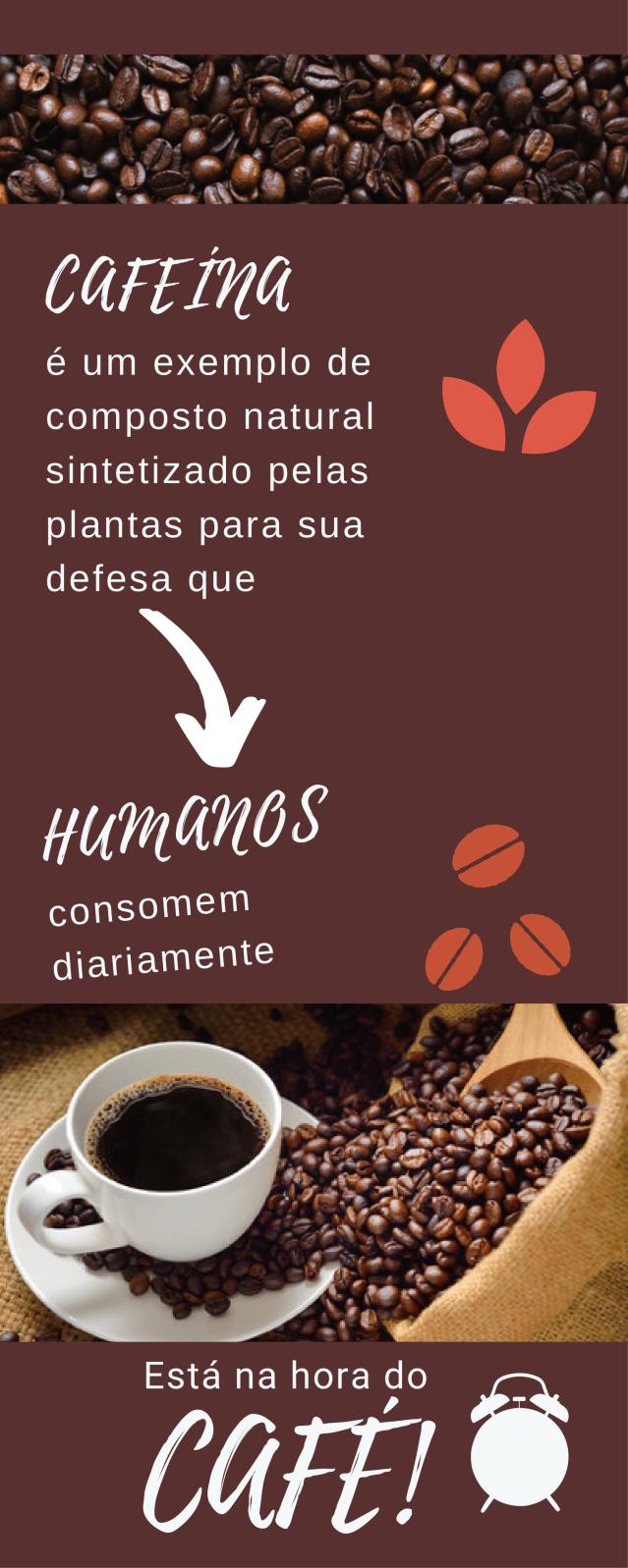 Cafeína bioquimica (1)-6